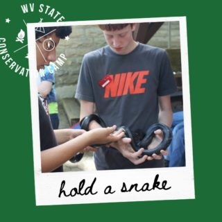 How many snake species are there in WV?  During a week at camp, our wildlife biologists and other natural resource managers can help you learn more about these important native reptiles.